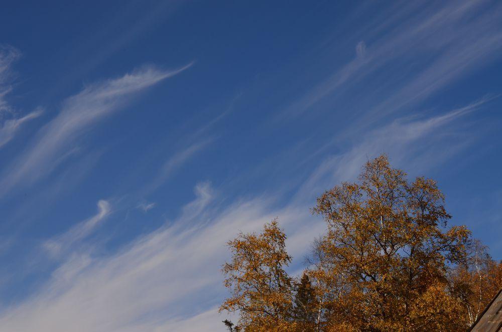 Облака ветки в небе