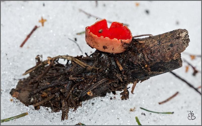 Первые грибы