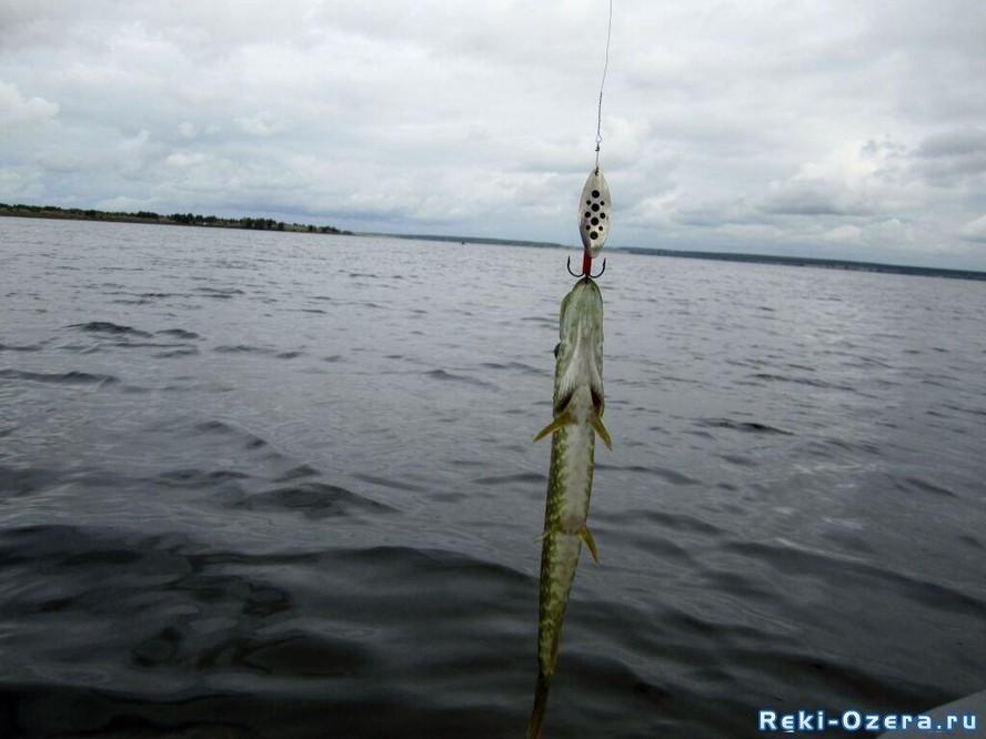 байнауш отчеты о рыбалке
