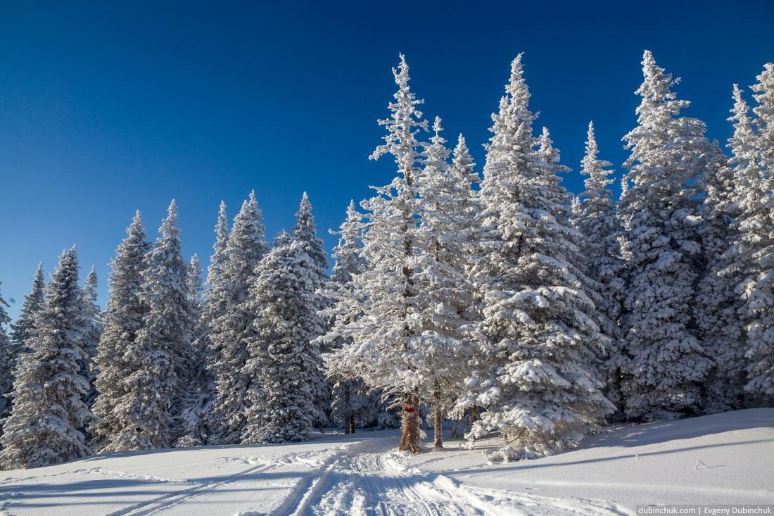 Тропа в зимнем уральском лесу