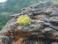 Растительный мир хребта Нурали.