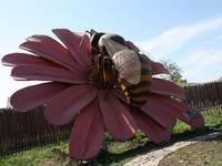 Динопарк «Динозаврик». Гигантские насекомые парка приключений. Пчела.
