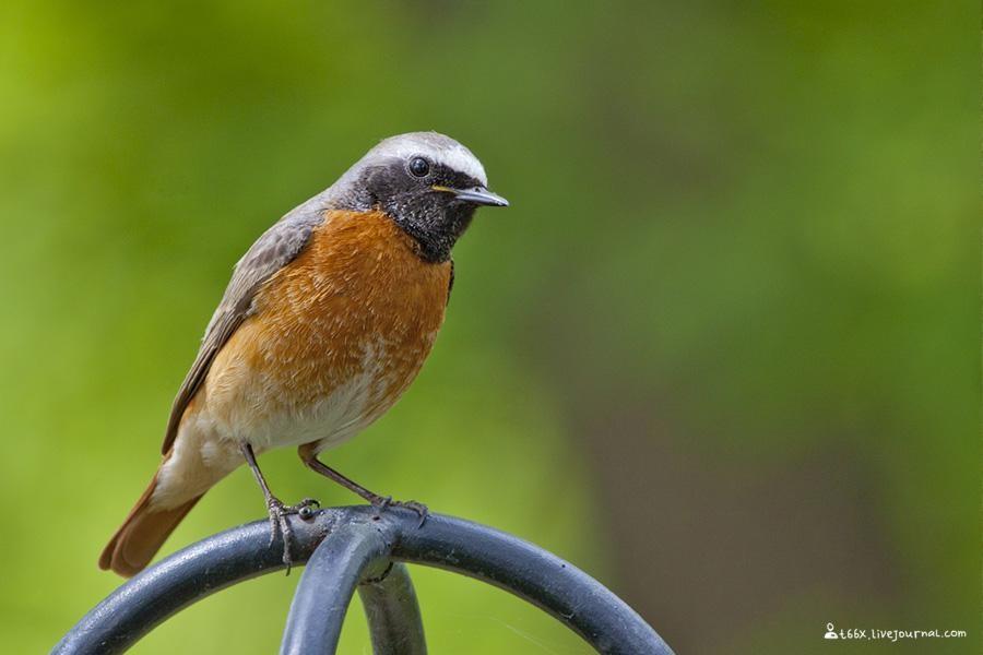 Челябинские птицы