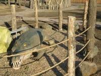 Динопарк «Динозаврик». Экспозиция 2012-2013 гг. Крокодил.