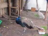 Аквапарк «Сонькина лагуна». Мини-зоопарк.