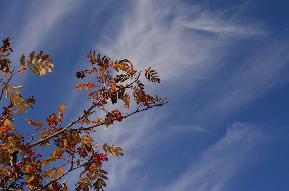 Рябина в облаках