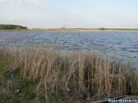Озеро Улагач. Камыш на берегу.