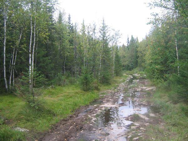 Дорога на Заячью поляну