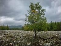 Большая каменная река. Место: Таганай. Автор: Lunargeorge
