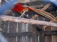 Аквапарк «Сонькина лагуна» (49)